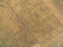 从寄生虫的鸟瞰图 在Combi以后收获踪影的米领域  免版税图库摄影