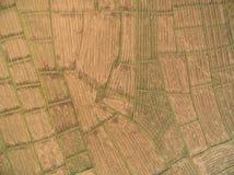 从寄生虫的鸟瞰图 在Combi以后收获踪影的米领域  图库摄影