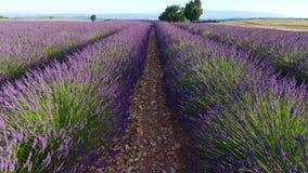 从寄生虫看的淡紫色领域 影视素材