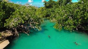 从寄生虫,维拉港,埃法特岛,瓦努阿图的蓝色盐水湖 股票录像