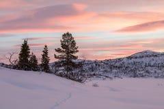 从导致一些云杉的树的狐狸的轨道在冬天环境美化与雪和美好的日出,在Setesdal,挪威 库存照片