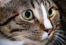 从屋顶的猫 免版税库存照片