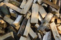 从山毛榉的木柴总体上筛选 库存图片