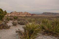 从峡谷地板的一个看法 图库摄影