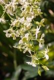 从巴厘岛宏指令摄影的热带花 库存图片