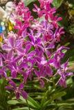 从巴厘岛宏指令摄影的热带花 免版税图库摄影