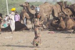 从市的骆驼供营商普斯赫卡尔,普斯赫卡尔Mela 亚洲, jaisalmer 库存图片