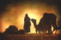 从市的骆驼供营商普斯赫卡尔,普斯赫卡尔Mela 免版税库存图片