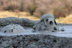 从布泽乌县罗马尼亚的泥泞的Vulcans 库存照片