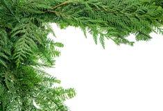 从常青大树枝的边界 免版税库存照片