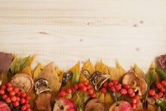 从干五颜六色的秋叶,干和新鲜的蘑菇,新鲜的野玫瑰果,花揪,在木背景的苹果的边界 免版税库存图片