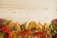 从干燥五颜六色的秋叶、新鲜的花楸浆果和干蘑菇的边界在木背景 免版税图库摄影