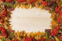 从干燥五颜六色的秋叶的框架、干和新鲜的蘑菇、新鲜的野玫瑰果和花楸浆果在木背景 免版税图库摄影