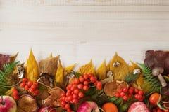 从干燥秋叶、蘑菇、新鲜的野玫瑰果和花楸浆果,新鲜和干苹果的边界在木背景 图库摄影