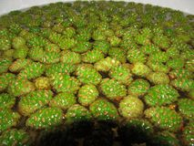 从年轻杉木锥体的果酱 做一个健康和可口点心的过程 库存图片