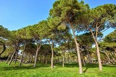从底部的白天视图到有人traini的绿色晴朗的公园 免版税库存图片
