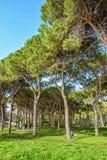 从底部的白天视图到有人traini的绿色晴朗的公园 免版税图库摄影