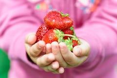 从庭院的新近地摘的草莓 库存照片