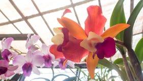 从庭院的新鲜的庭院花 免版税库存照片