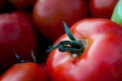 从庭院的新鲜被采摘的红色蕃茄 库存照片