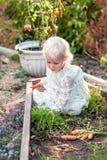 从庭院的甜小女孩儿童采摘红萝卜 免版税库存图片