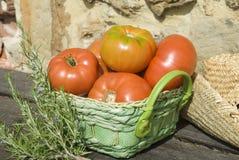 从庭院的红色蕃茄 免版税图库摄影