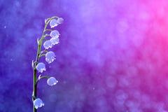 从庭院的美丽的花有吸引力的夏天颜色的 库存例证