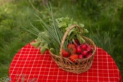 从庭院的菜 在篮子的新鲜的生物菜 在自然背景 库存照片