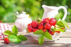 从庭院采摘的成熟草莓新鲜 库存照片