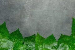 从形成在黑暗的石背景的新鲜的绿色常春藤叶子的美好的样式框架边界 横幅海报卡片公告 库存照片