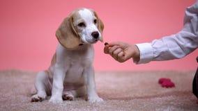 从手、无家可归的动物收养、关心和仁慈的喂小孩小狗 免版税库存图片
