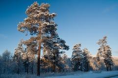 从挪威的冬天场面 免版税库存照片