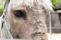 从接近的驴看照相机 库存图片