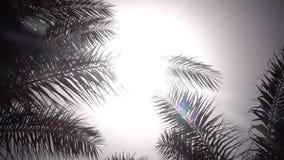 从摇摆的棕榈树的叶子在从太阳的明亮的光发光的风 关闭 股票视频