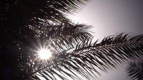 从摇摆的棕榈树的叶子在从太阳的明亮的光发光的风 关闭 影视素材
