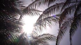 从摇摆的棕榈树的叶子在从太阳的明亮的光发光的风 关闭 股票录像