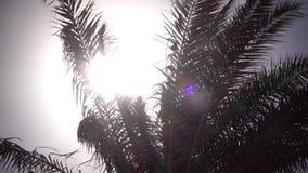 从摇摆的棕榈树的叶子在从太阳的明亮的光发光的风 影视素材