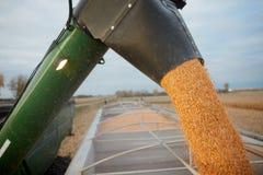 从收割机被释放的被收获的玉米 免版税库存图片