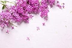从新鲜的紫罗兰色淡紫色花的框架在灰色织地不很细backgrou 免版税库存照片