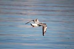 从日内瓦湖的鸟 图库摄影