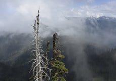 从日出点,奥林匹克国家公园,华盛顿的消散的云彩 免版税库存图片