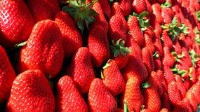 从春天的红色新鲜的草莓 免版税库存图片