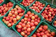 从有机和国内繁殖的新鲜的被采摘的蕃茄准备待售 免版税库存图片