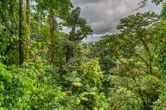 从机盖桥梁观看的密林 库存照片