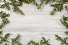 从杉树自然分支的框架在木背景的 库存图片