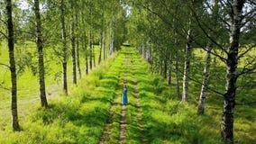 从树上面的水平的看法在少妇的有一根长的公平的头发的和去沿桦树的一件蓝色礼服的 股票录像