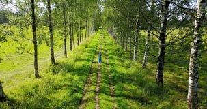 从树上面的水平的看法在少妇的有一根长的公平的头发的和去沿桦树的一件蓝色礼服的 股票视频