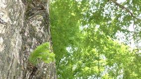 从树干增长的叶子 影视素材