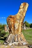 从树干形成的石化岩石 图库摄影
