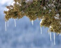 从树枝的冰柱 免版税库存照片